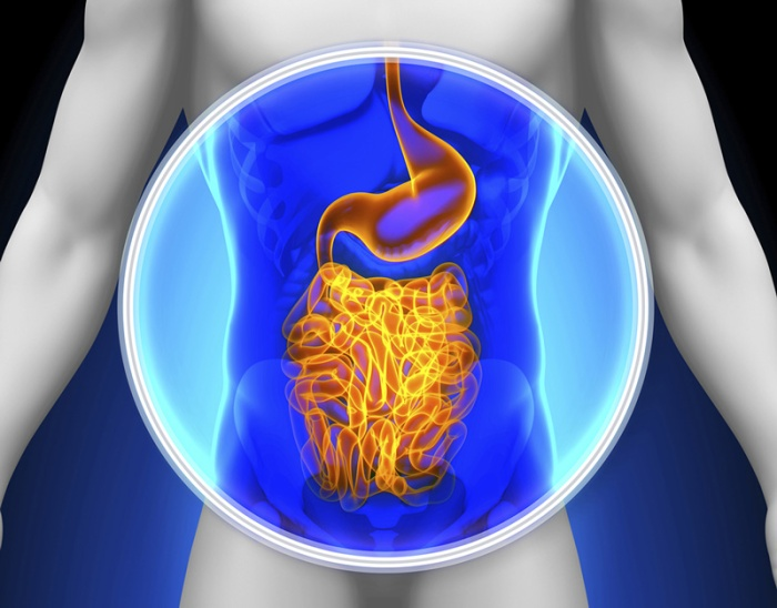 intestinal-gut